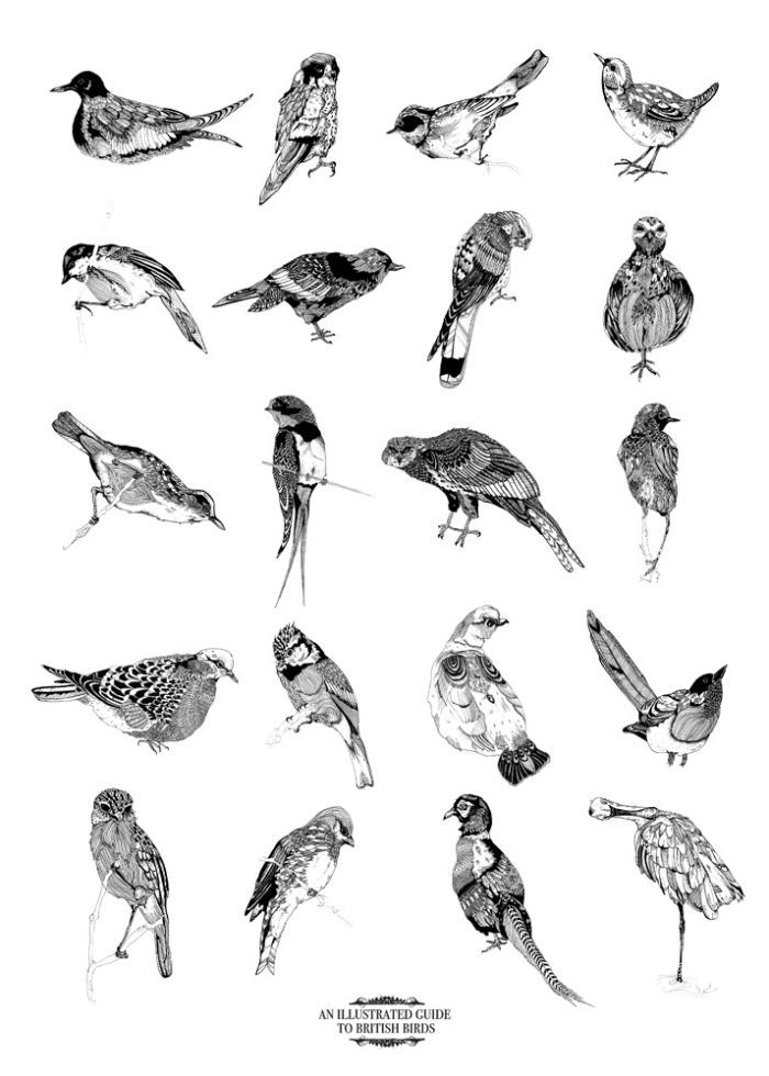 bird_poster_CR
