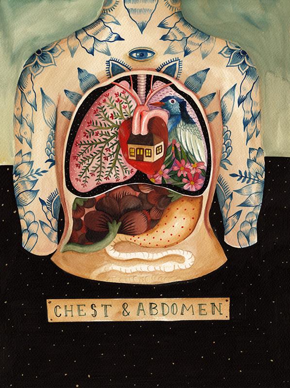 chest-abdomen_2_597