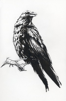 raven_1_by_allisonsohn-d8exubx