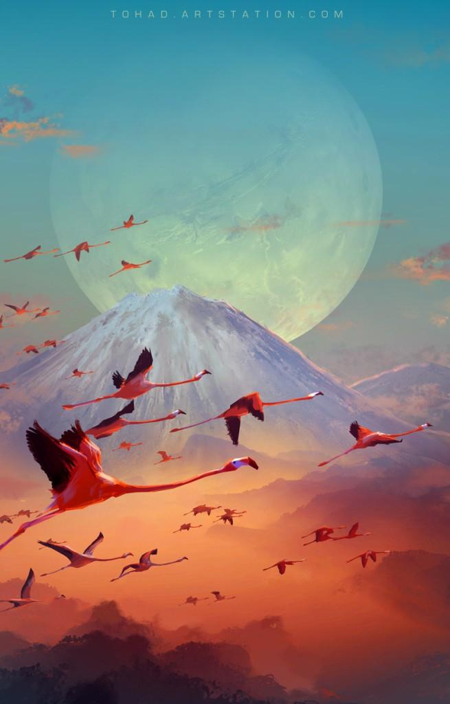 sylvain-sarrailh-flamingo