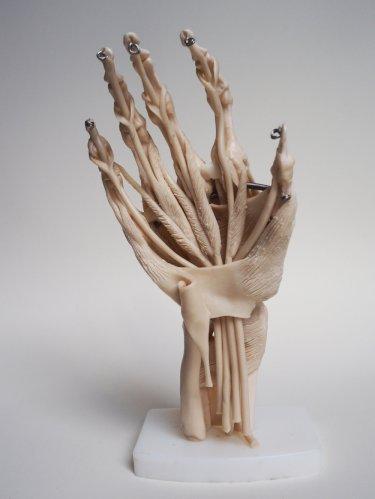 Merlin-Strangeway-modeled-hand